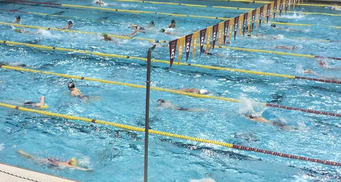 Swimmers in pool with swimming lanes